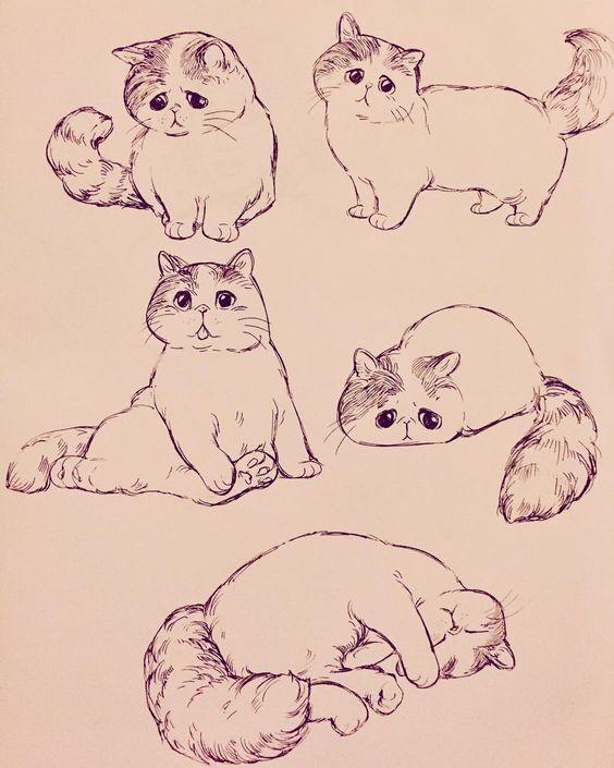 Картинки кошек и котят для срисовки - очень красивые и прикольные 10