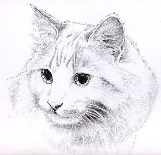 Картинки кошек и котят для срисовки - очень красивые и прикольные 12
