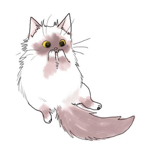 Картинки кошек и котят для срисовки - очень красивые и прикольные 14
