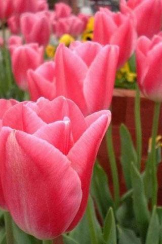 Картинки на телефон букеты и цветы - самые красивые и удивительные 12