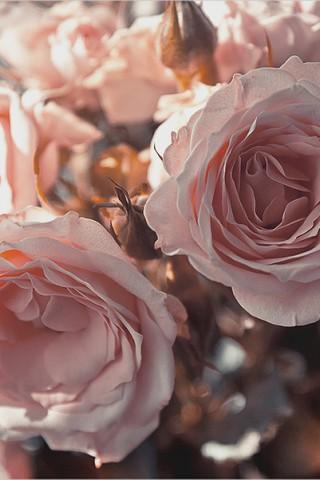 Картинки на телефон букеты и цветы - самые красивые и удивительные 14