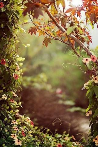 Картинки на телефон природа и пейзажи - скачать бесплатно №6 17
