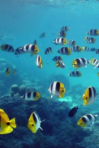 Красивые картинки воды и водного мира на телефон - лучшие заставки №10 1
