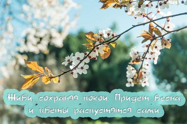 Красивые фразы и высказывания про весну - удивительная подборка 4