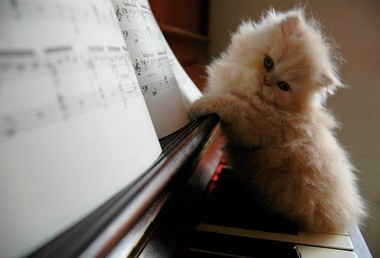 Милые картинки с котиками - самые удивительные и приятные 10