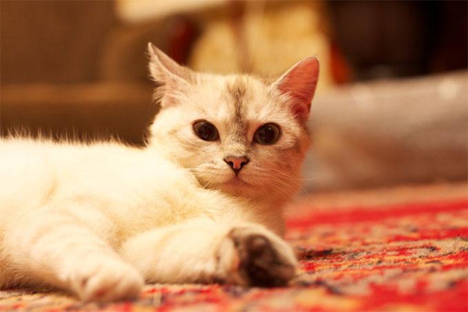 Милые картинки с котиками - самые удивительные и приятные 11
