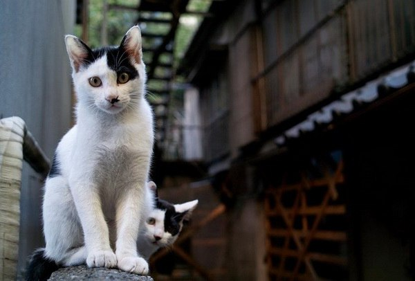 Милые картинки с котиками - самые удивительные и приятные 14