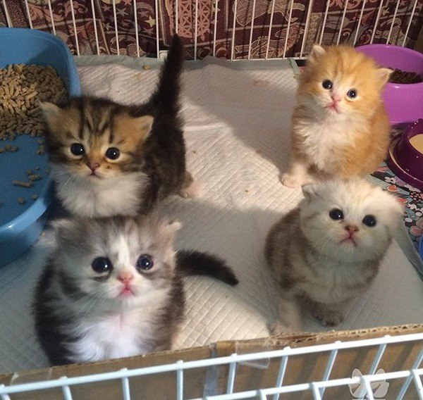 Милые картинки с котиками - самые удивительные и приятные 2