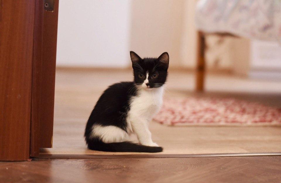 Милые картинки с котиками - самые удивительные и приятные 5