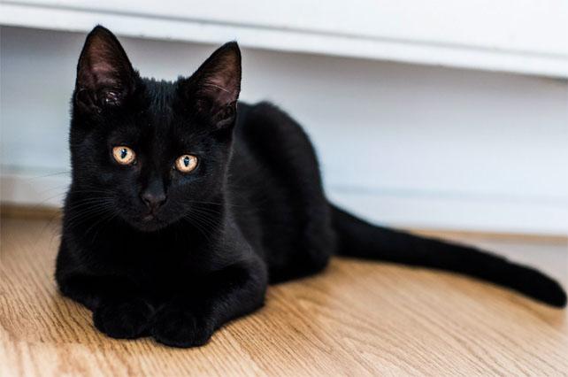 Милые картинки с котиками - самые удивительные и приятные 7