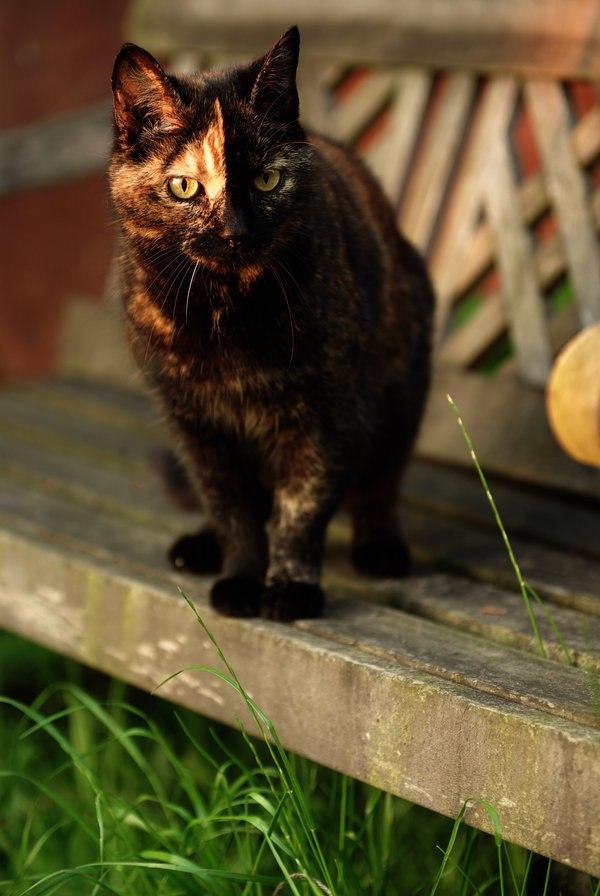 Милые картинки с котиками - самые удивительные и приятные 9