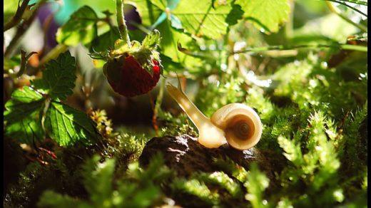 Муравьи на клубнике - как избавиться и защитить растение, способы 2