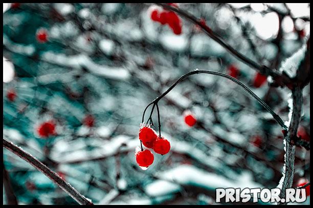 Почему не плодоносит вишня, что делать Основные советы и хитрости 2
