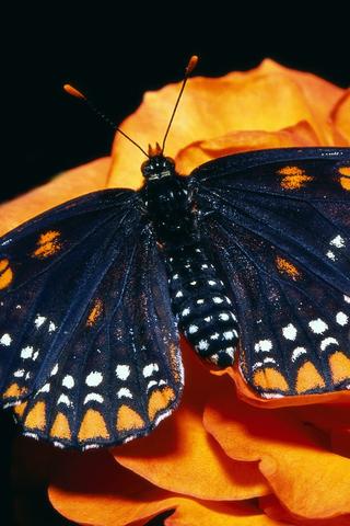 Прикольные и красивые картинки на телефон бабочки - подборка 11