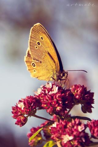 Прикольные и красивые картинки на телефон бабочки - подборка 13