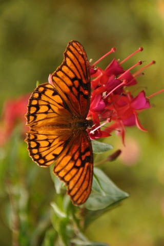 Прикольные и красивые картинки на телефон бабочки - подборка 14