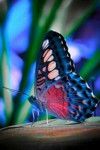 Прикольные и красивые картинки на телефон бабочки - подборка 3