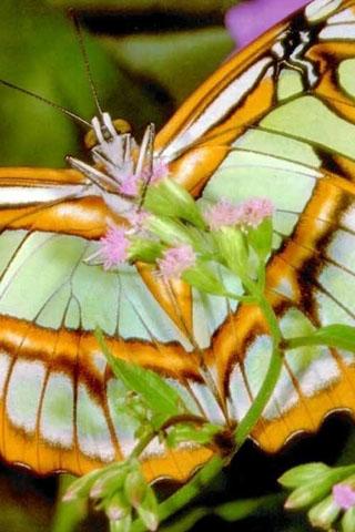 Прикольные и красивые картинки на телефон бабочки - подборка 5