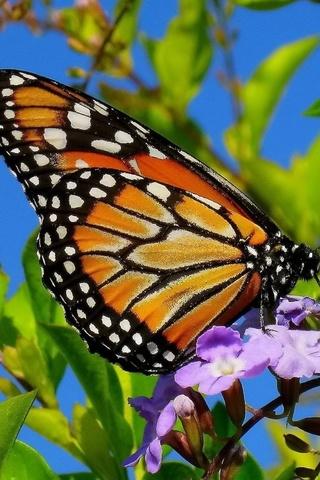 Прикольные и красивые картинки на телефон бабочки - подборка 9
