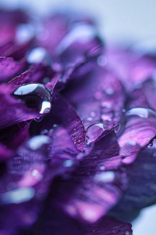 Прикольные и красивые картинки цветов на телефон - скачать бесплатно №2 11