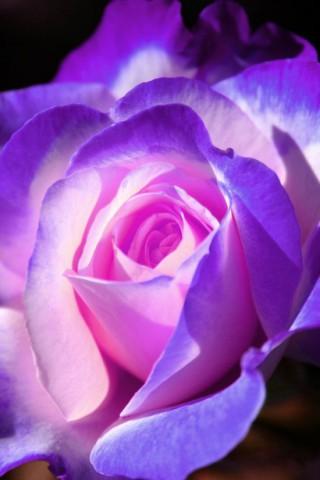 Прикольные и красивые картинки цветов на телефон - скачать бесплатно №2 16