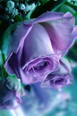 Прикольные и красивые картинки цветов на телефон - скачать бесплатно №2 4