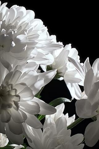 Прикольные и красивые растения картинки на телефон - лучшие №11 1
