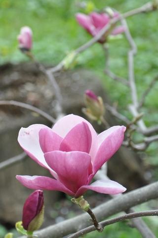 Прикольные и красивые растения картинки на телефон - лучшие №11 11
