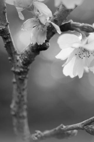 Прикольные и красивые растения картинки на телефон - лучшие №11 12