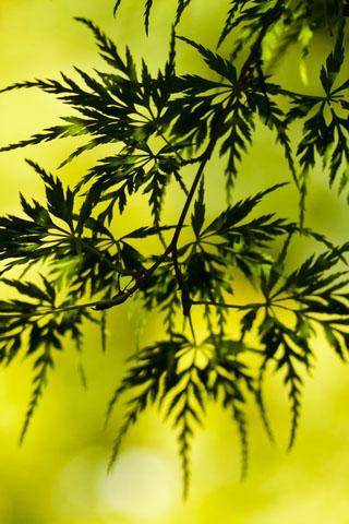 Прикольные и красивые растения картинки на телефон - лучшие №11 15