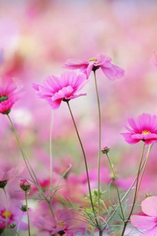 Прикольные и красивые растения картинки на телефон - лучшие №11 16