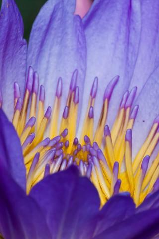 Прикольные и красивые растения картинки на телефон - лучшие №11 5