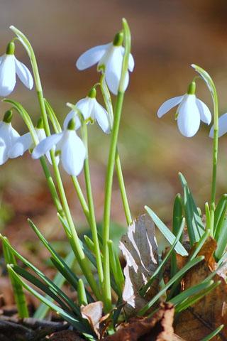 Прикольные и красивые растения картинки на телефон - лучшие №11 6