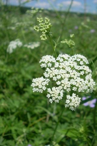Прикольные и красивые растения картинки на телефон - лучшие №11 8