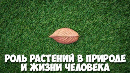 Роль растений в природе и жизни человека - интересное о растениях 1