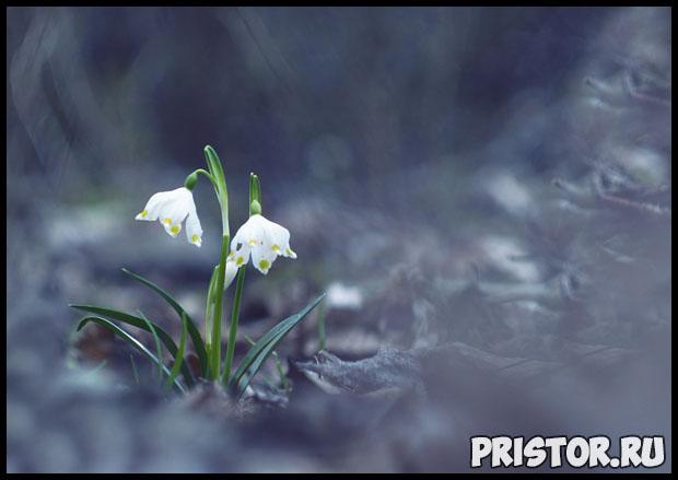 Роль растений в природе и жизни человека - интересное о растениях 2