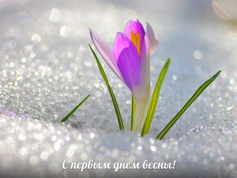 С Первым Днем Весны - красивые и прикольные картинки, скачать 1