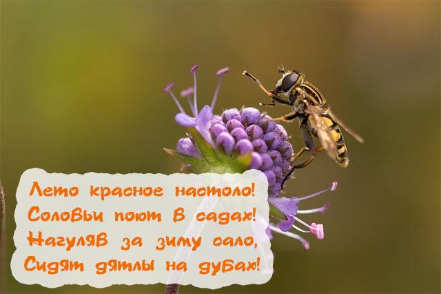 Картинки наступившего лета прикольные и красивые - подборка с текстом 11