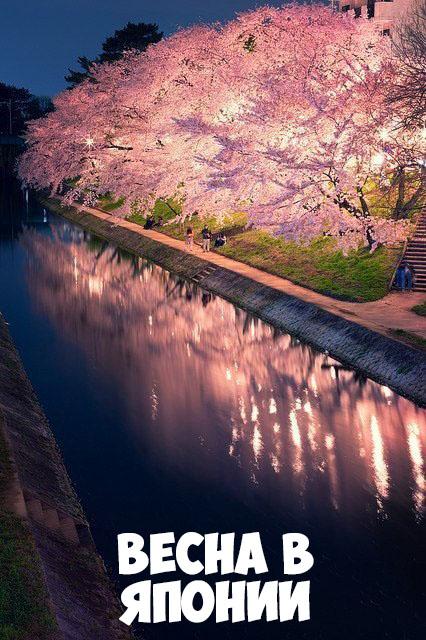 Картинки про весну красивые и интересные - прикольная подборка 11