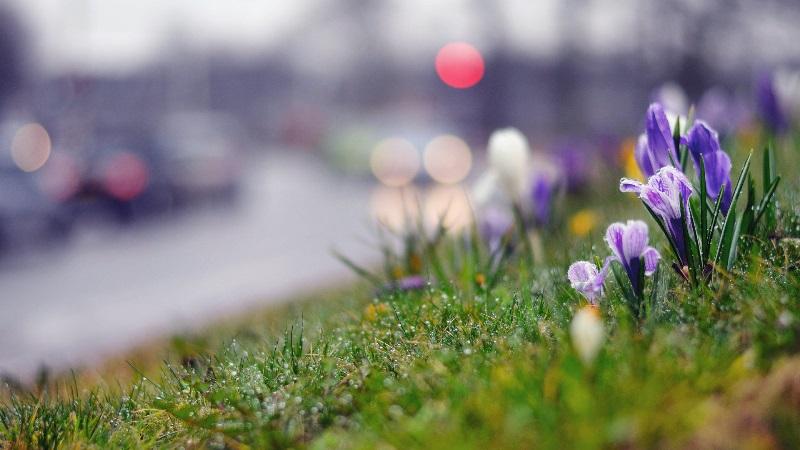 Картинки про весну красивые и интересные - прикольная подборка 12