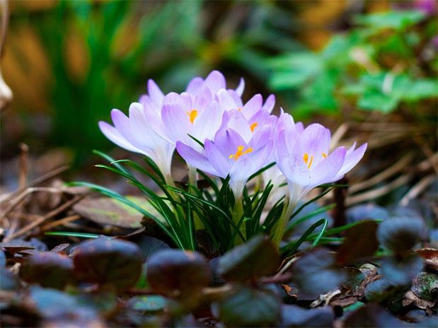 Картинки про весну красивые и интересные - прикольная подборка 4