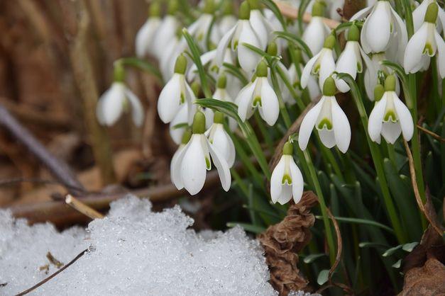 Картинки про весну красивые и интересные - прикольная подборка 6