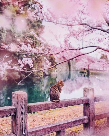 Картинки про весну красивые и интересные - прикольная подборка 7