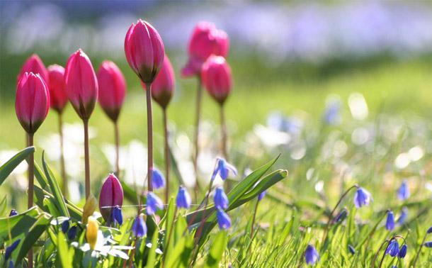 Картинки про весну красивые и интересные - прикольная подборка 9