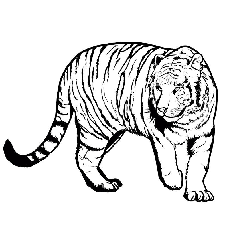 Картинки тигра для срисовки карандашом - красивые и прикольные 2