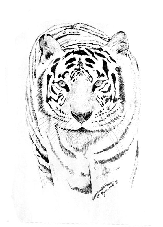 Картинки тигра для срисовки карандашом - красивые и прикольные 7