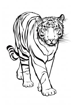 Картинки тигра для срисовки карандашом - красивые и прикольные 9