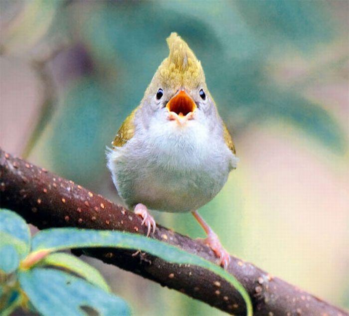 Прикольные и смешные птицы - картинки и фотографии с надписями 1