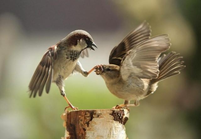 Прикольные и смешные птицы - картинки и фотографии с надписями 10