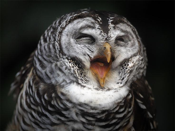 Прикольные и смешные птицы - картинки и фотографии с надписями 15
